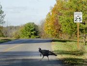 19th Nov 2020 - 25 mph .... Whatever!