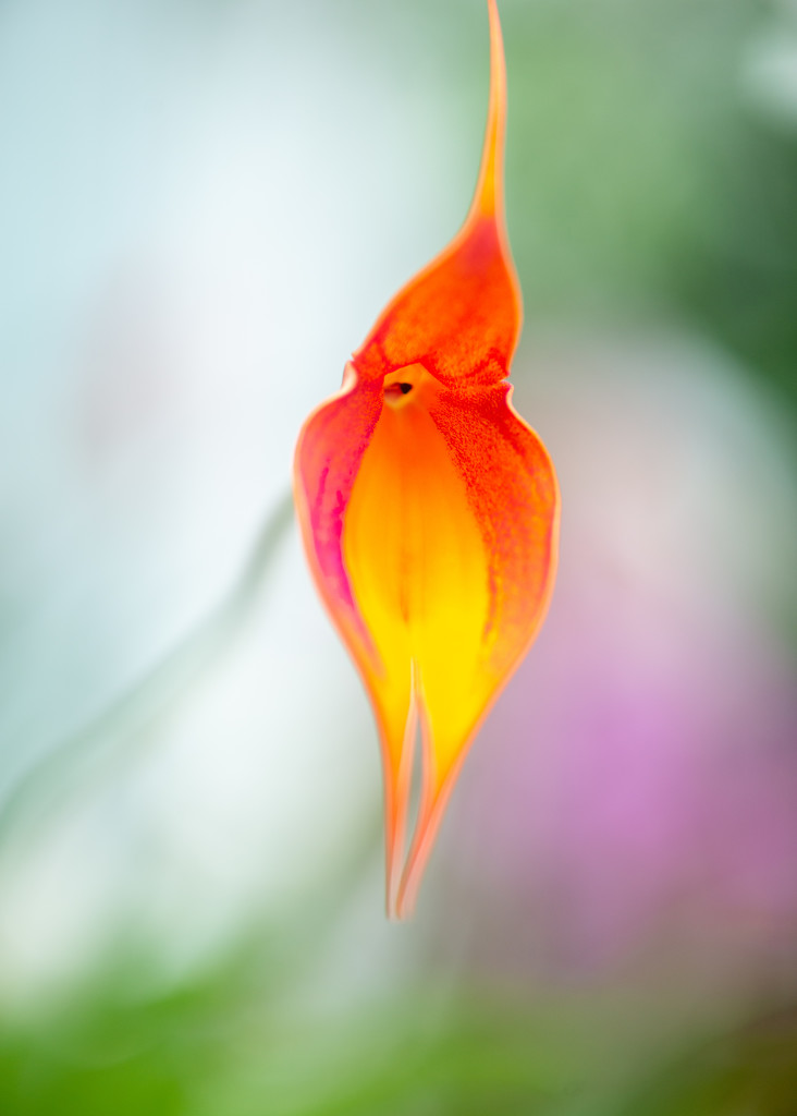 Strange Plant by yaorenliu