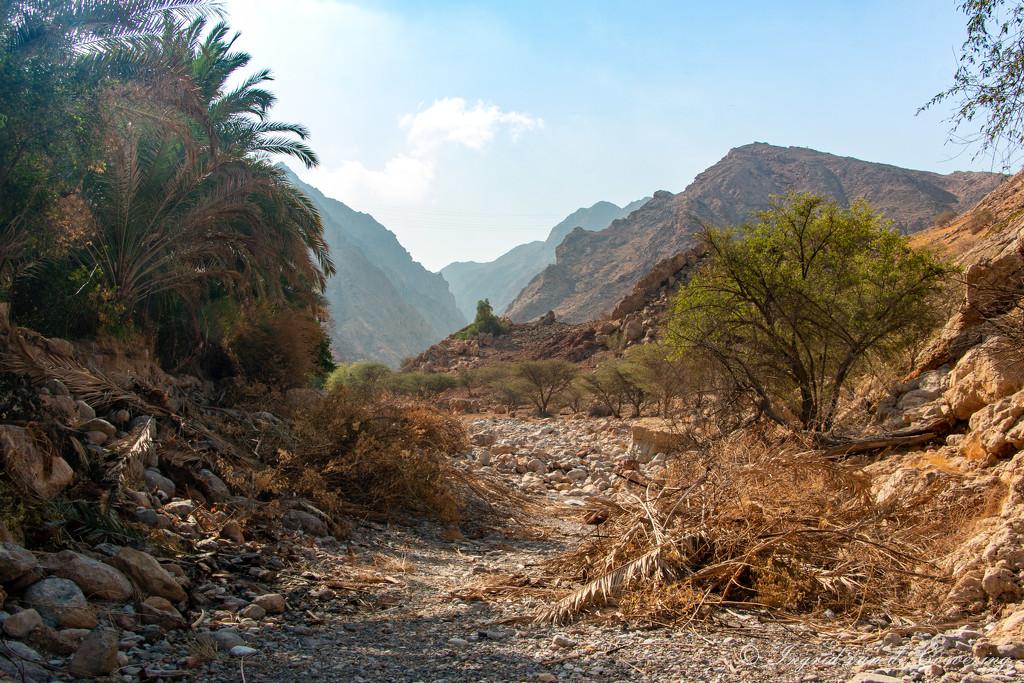 A Wadi by ingrid01