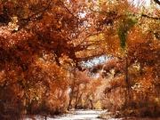 20th Nov 2020 - End of Autumn