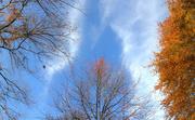 20th Nov 2020 - Blue skies up above