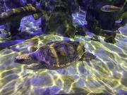 20th Nov 2020 - Turtle