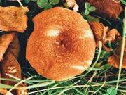 19th Nov 2020 - Doughnut Shroom