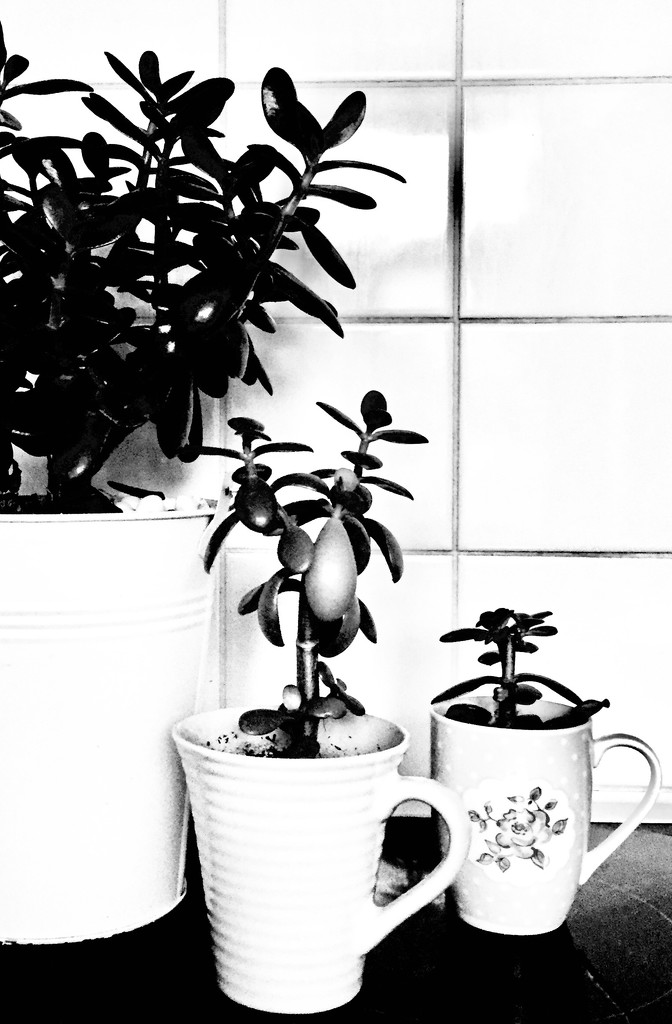 Money plants by lilaclisa