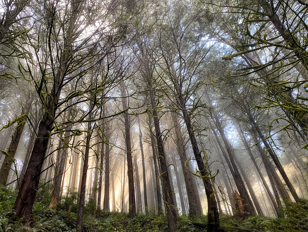 Forest Rays  by jgpittenger