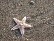 19th Nov 2020 - Sand Stranded