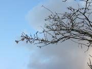 15th Nov 2020 - Winter Blossom
