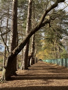 19th Nov 2020 - Another super walk in Sutton Park