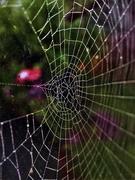11th Nov 2020 - Thru the Web 2