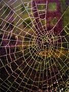 10th Nov 2020 - Thru the Web