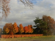 21st Nov 2020 - autumn colours