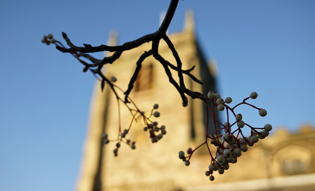 Rowan Berries at St. Mary's Church by phil_howcroft