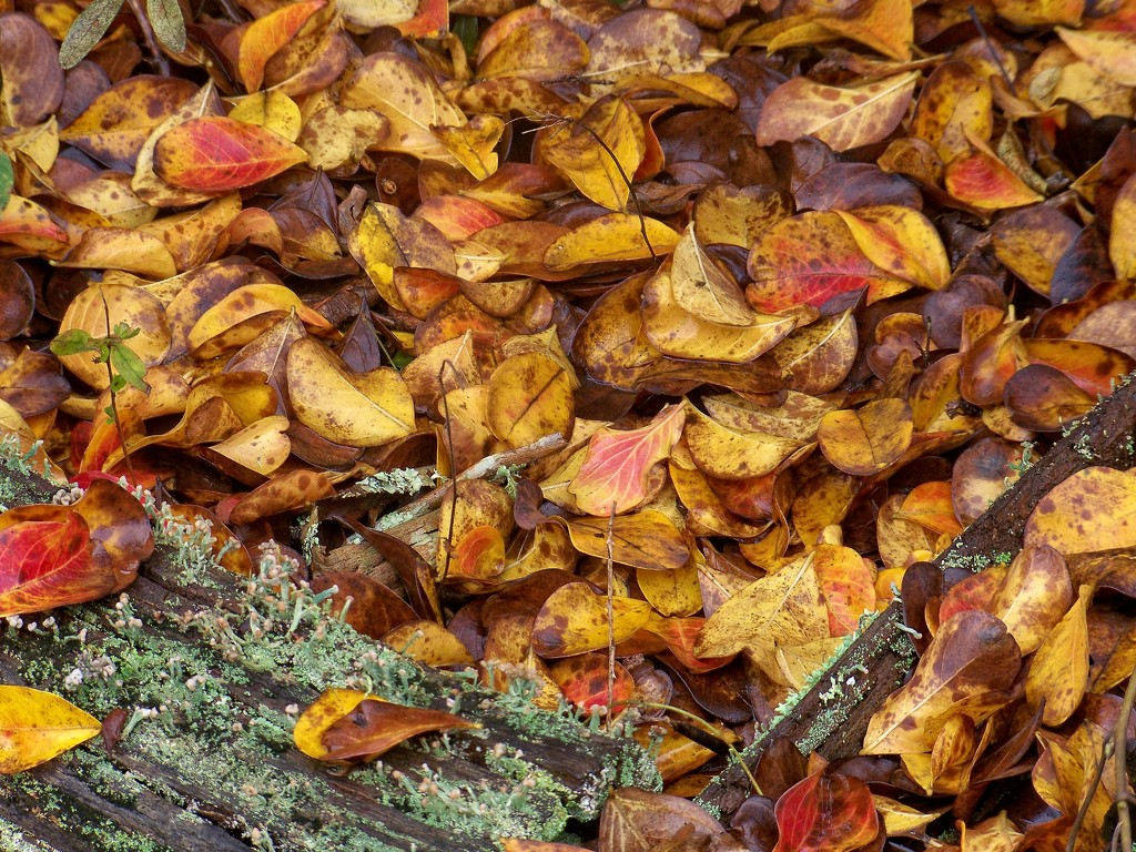 Crepe Myrtle leaf clutter... by marlboromaam
