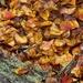 Crepe Myrtle leaf clutter...