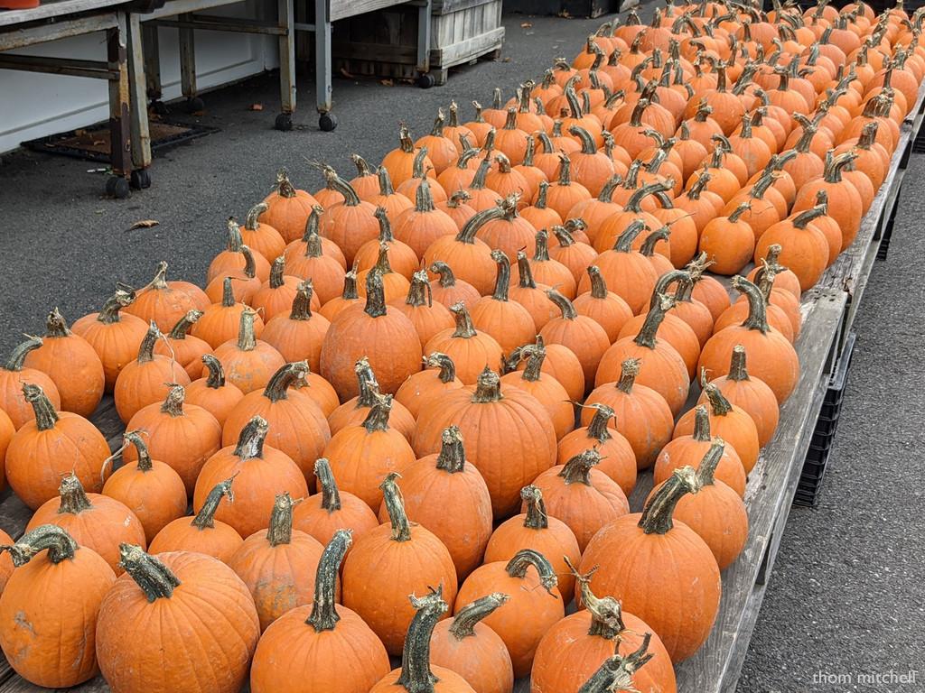 Pumpkins! by rhoing