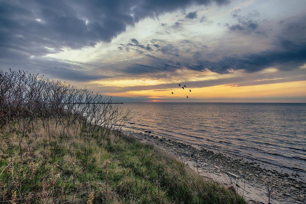 The Wondrous Bird Migration by pdulis