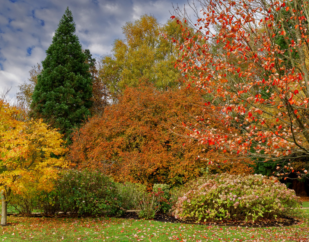 1120 - Emmetts Garden by bob65