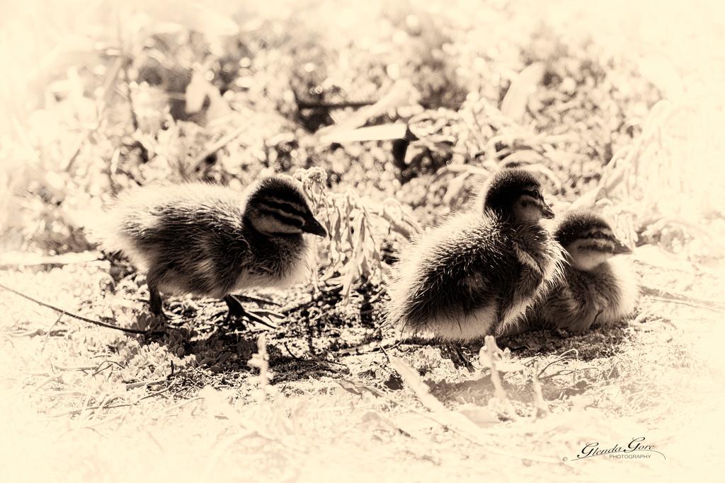 Nostalgic Ducklings by glendamg