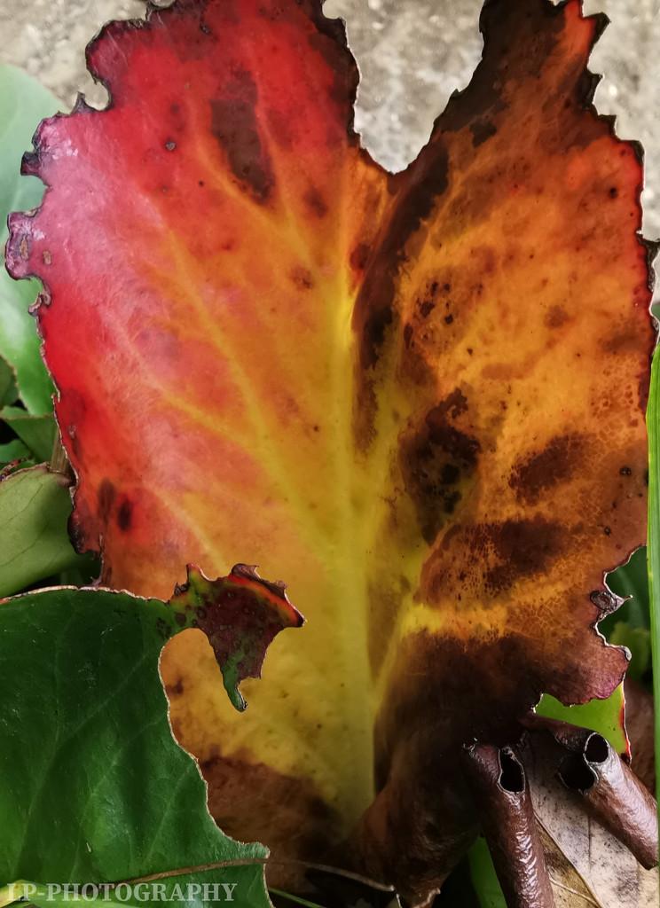 I Be-leaf In Love 💜 by tiredpanda