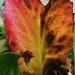 I Be-leaf In Love 💜