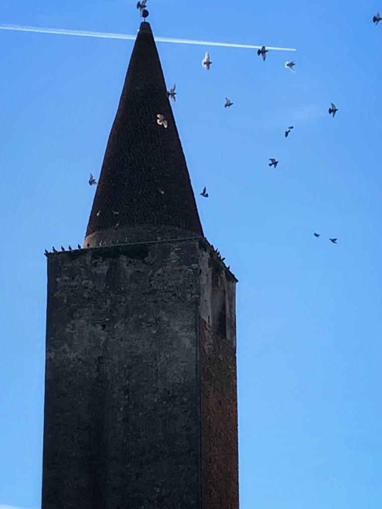 Flights above the bell tower by caterina