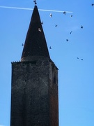 21st Nov 2020 - Flights above the bell tower