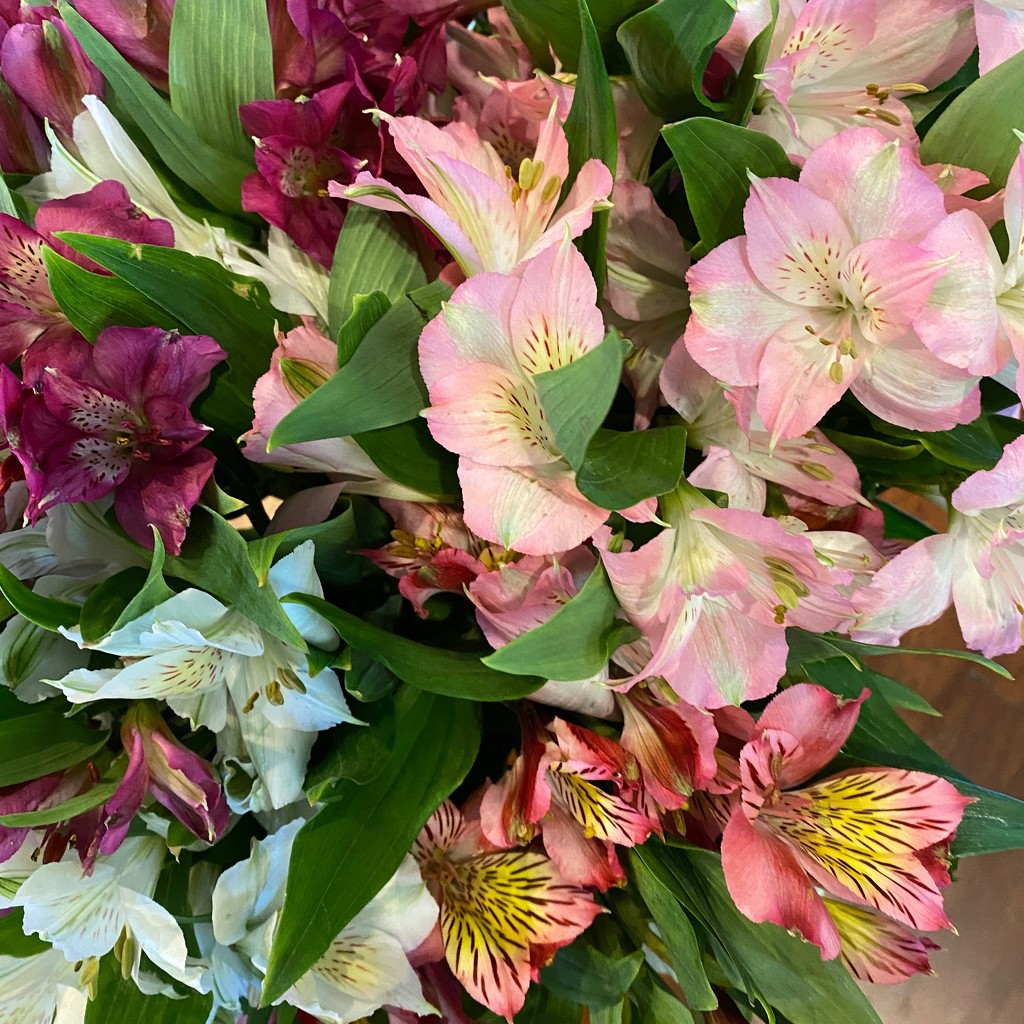 Top down view of alstroemeria bouquet  by shutterbug49