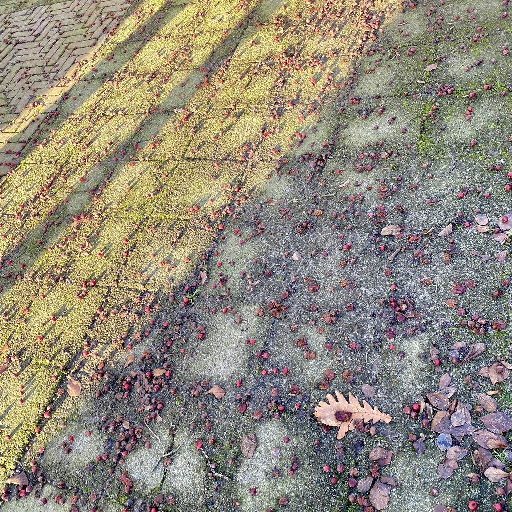 FALLen shadows by stimuloog