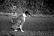 5th Nov 2020 - ghost dog