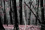7th Nov 2020 - forest