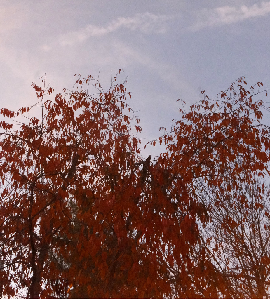A Nice Fall Day ♥ by linnypinny