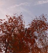 21st Nov 2020 - A Nice Fall Day ♥