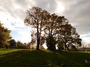 21st Nov 2020 - Nearly Bare Trees