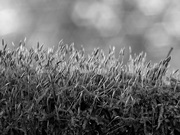 22nd Nov 2020 - Moss in black and white...