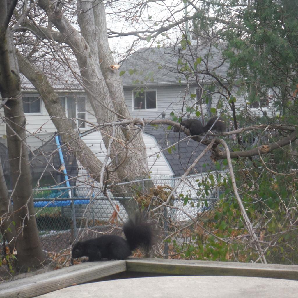 Backyard Action by spanishliz
