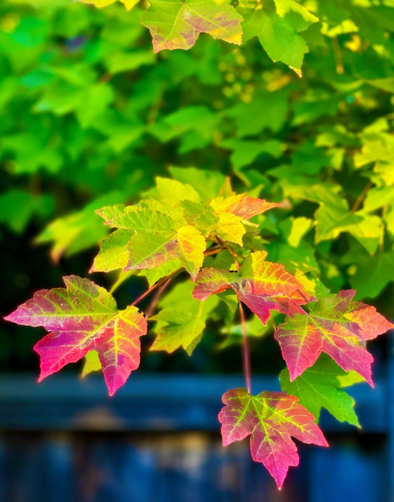 Bright Colors in the Fall by gardenfolk