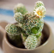 18th Nov 2020 - Succulent with Flower