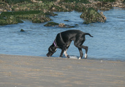 22nd Nov 2020 - Just a dog on the beach