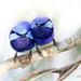 Splendid Fairy Wrens by glendamg
