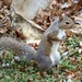 November 22: Squirrel