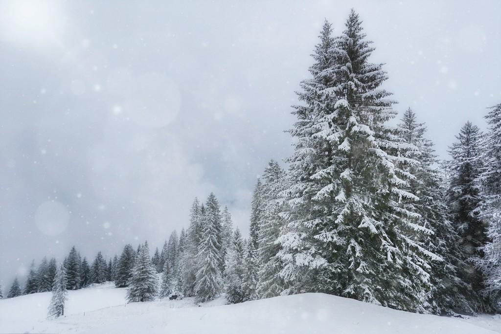 2020-11-22 winter wonderland by mona65