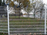 19th Nov 2020 - Sitting on the fence