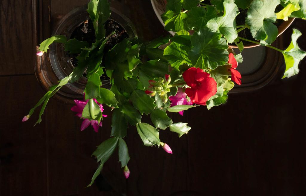 Blooming by randystreat