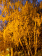 22nd Nov 2020 - Golden autumn in the blue hour