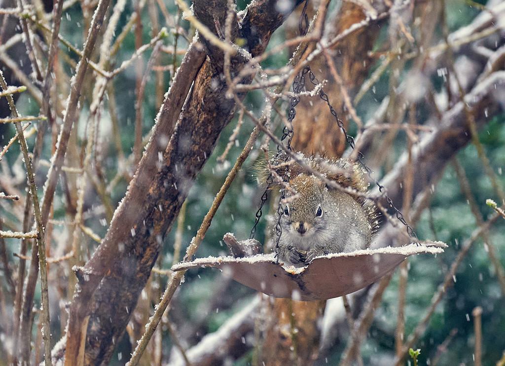 Same Dish, Same Squirrel, Different Weather by gardencat
