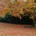 Autumn colours 19