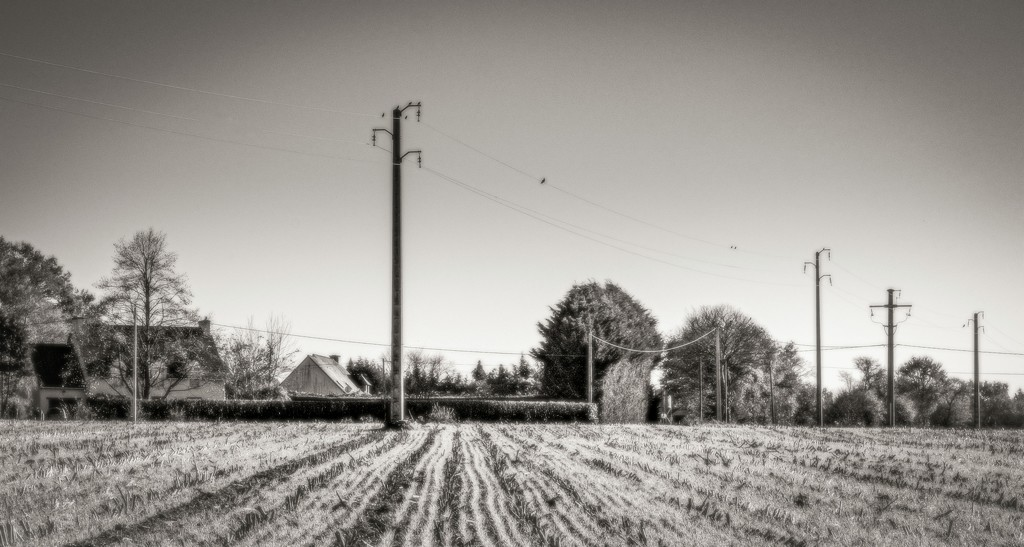 Lines... by vignouse