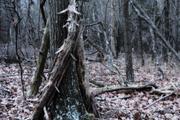 8th Nov 2020 - Forest