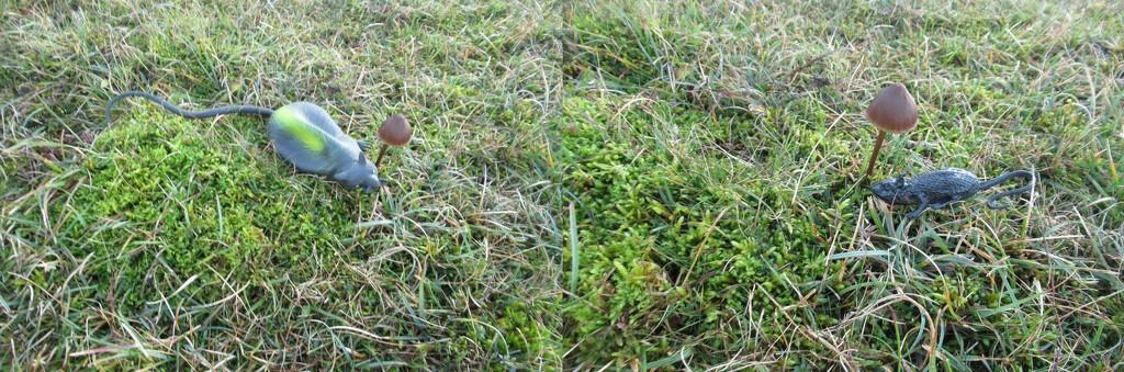 not mushroom under here by anniesue