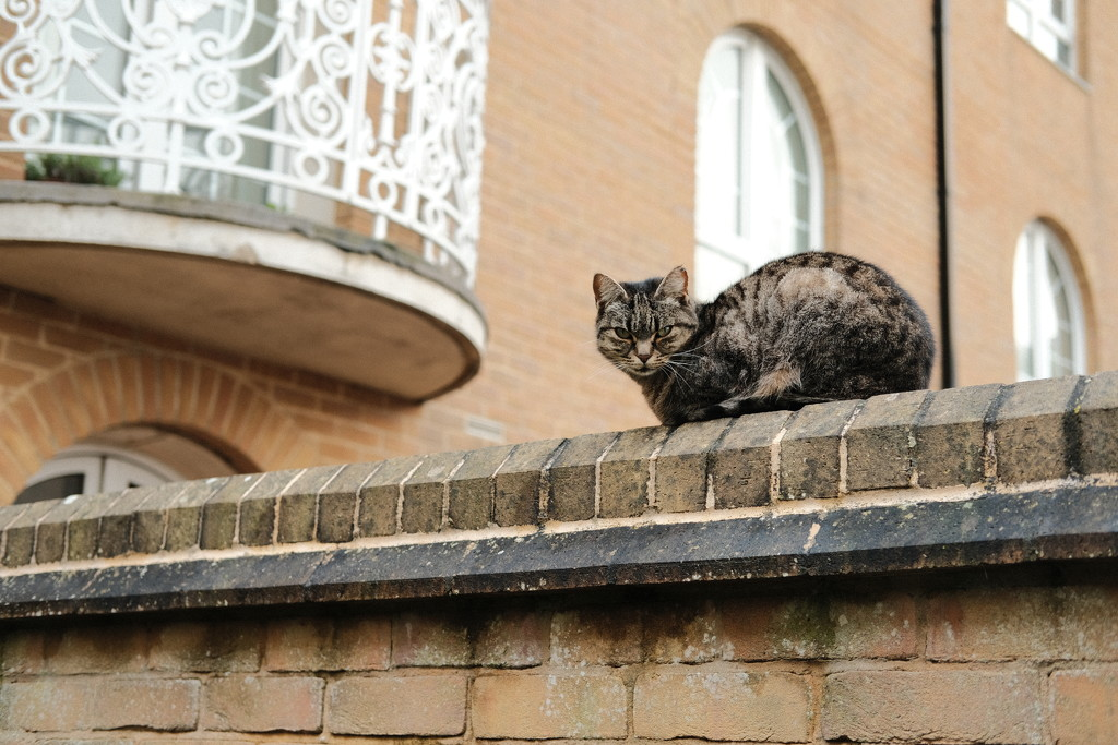 Cat on a Wall by 4rky